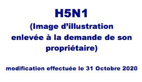Le H5N1 toujours en embuscade...